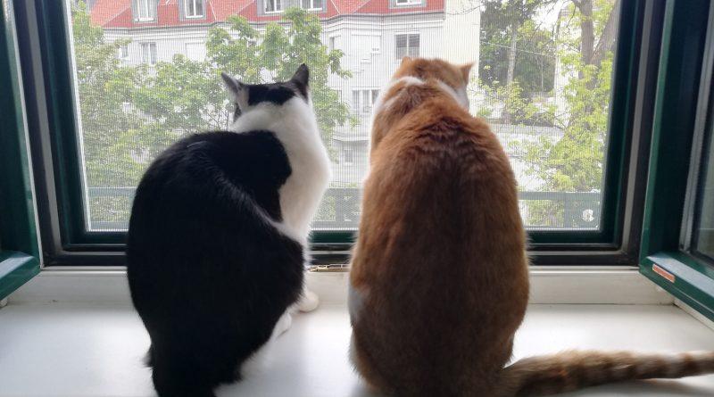 Katzenschutz.at