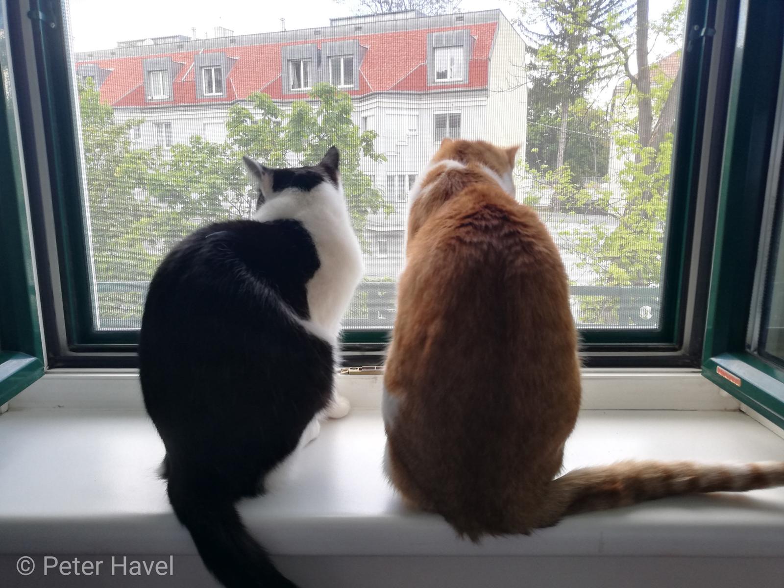Transparente Katzengitter